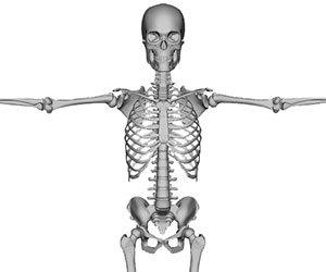 多発性骨髄腫-症状-骨の痛み-腰痛-原因-骨画像.jpg