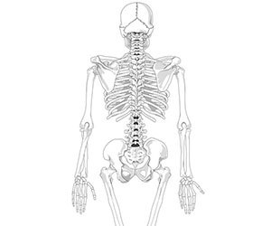 血管年齢-肌年齢-骨年齢-測定-方法-指先-検査-画像2.jpg