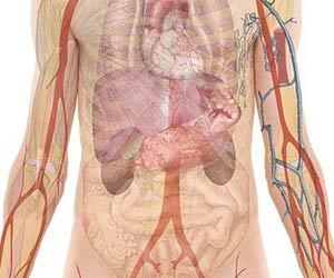 高血圧-腎臓病-関係-糖尿病-腎臓位置画像.jpg