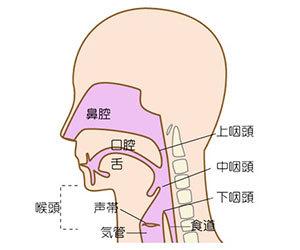 鼻づまり-頭痛-歯痛-だるい-微熱-めまい-吐き気-倦怠感-原因-副鼻腔炎-鼻腔画像.jpg